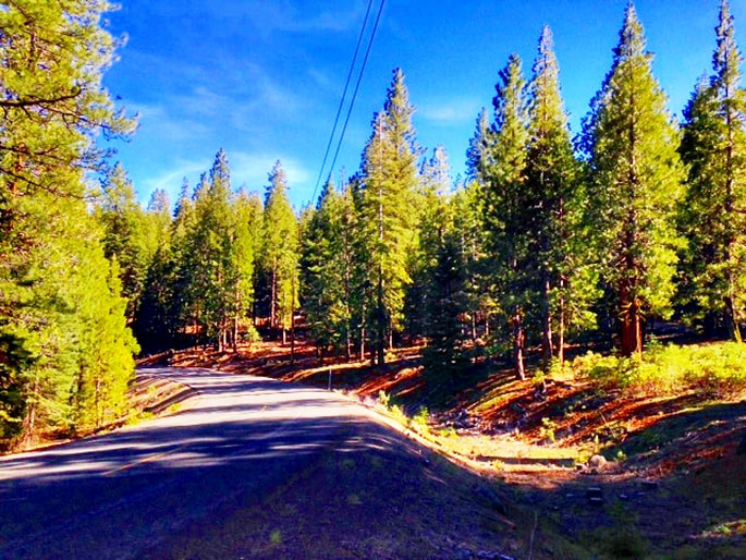 Northern California lot with trees, paved road and power